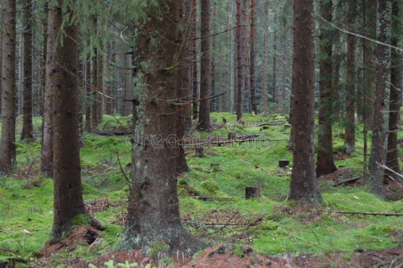βαθιά δάση στοκ εικόνες