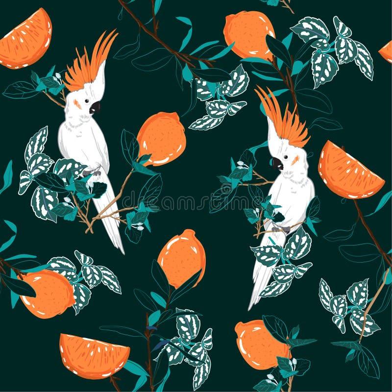 Βαθιά - πράσινη δασική τυπωμένη ύλη Πουλί παπαγάλων στη ζούγκλα με τα πορτοκάλια διανυσματική απεικόνιση