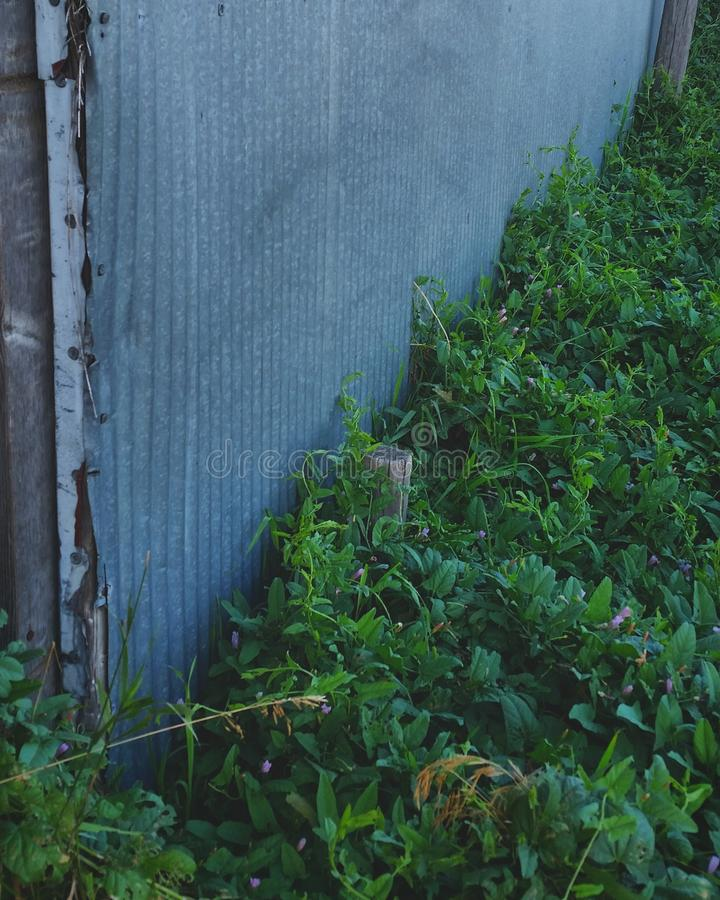 Βαθιά - πράσινος στοκ φωτογραφίες