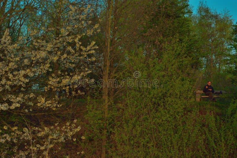 Βαθιά στο μελαχροινό και απόκοσμο δάσος, τα άτομα που τρώνε σε έναν πάγκο και τα ανθίζοντας δέντρα στοκ εικόνα