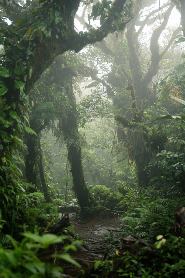 Βαθιά στο πολύβλαστο ομιχλώδες τροπικό δάσος στοκ εικόνες