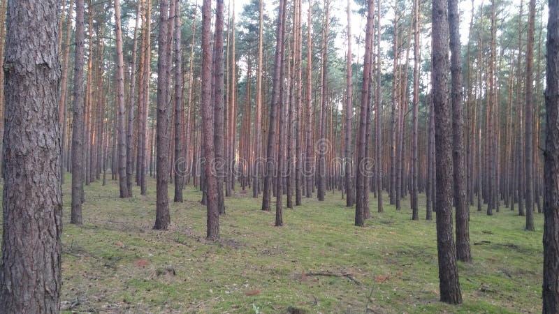 Βαθύ δάσος στοκ εικόνες με δικαίωμα ελεύθερης χρήσης