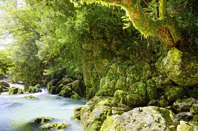 βαθύ δάσος στοκ φωτογραφία