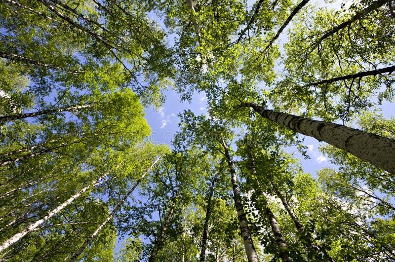 βαθύ δάσος στοκ φωτογραφίες με δικαίωμα ελεύθερης χρήσης