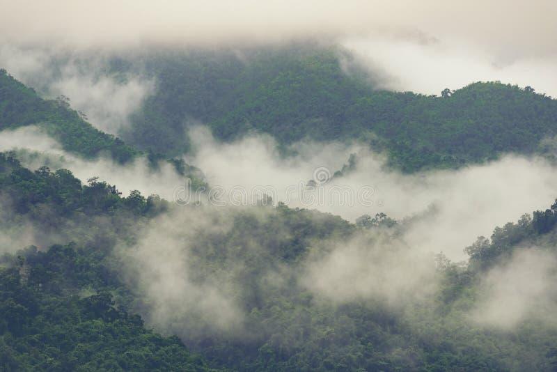 Βαθύ τροπικό δάσος, δέντρο θόλων και ομίχλη στοκ φωτογραφία με δικαίωμα ελεύθερης χρήσης