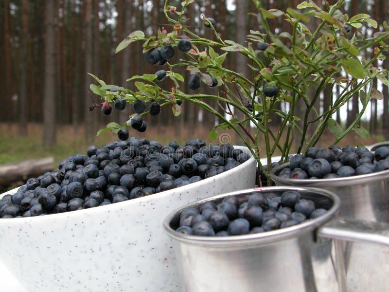 Download βακκίνια στοκ εικόνα. εικόνα από μπλε, φυτό, καρποί, δάσος - 100811