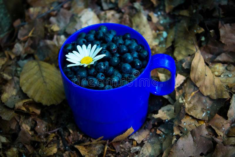 Βακκίνιο με chamomile & x28 ή daisy& x29  σε ένα μπλε φλυτζάνι στα φύλλα στοκ εικόνα