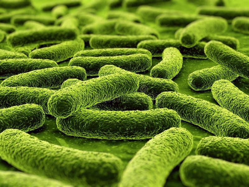 βακτηρίδια ελεύθερη απεικόνιση δικαιώματος