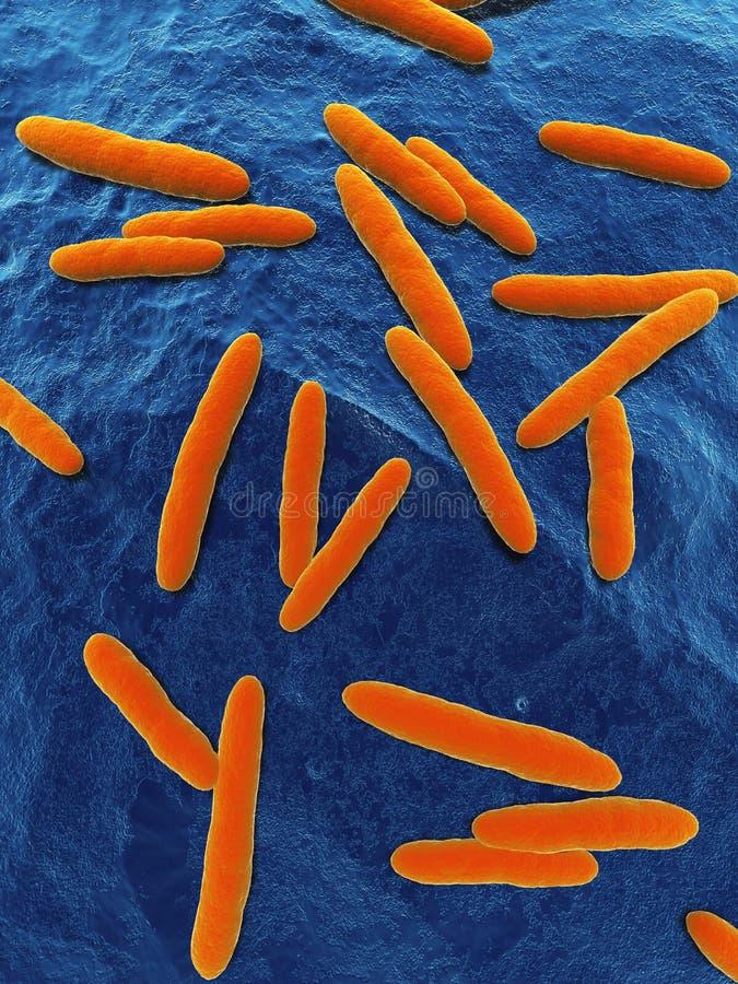 βακτηρίδιο του όξους απεικόνιση αποθεμάτων
