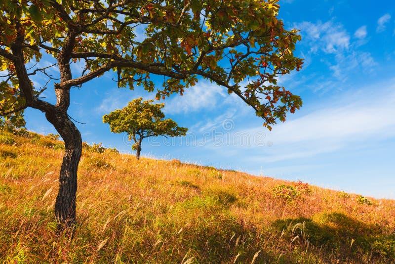 βαλανιδιά φθινοπώρου στοκ εικόνα με δικαίωμα ελεύθερης χρήσης