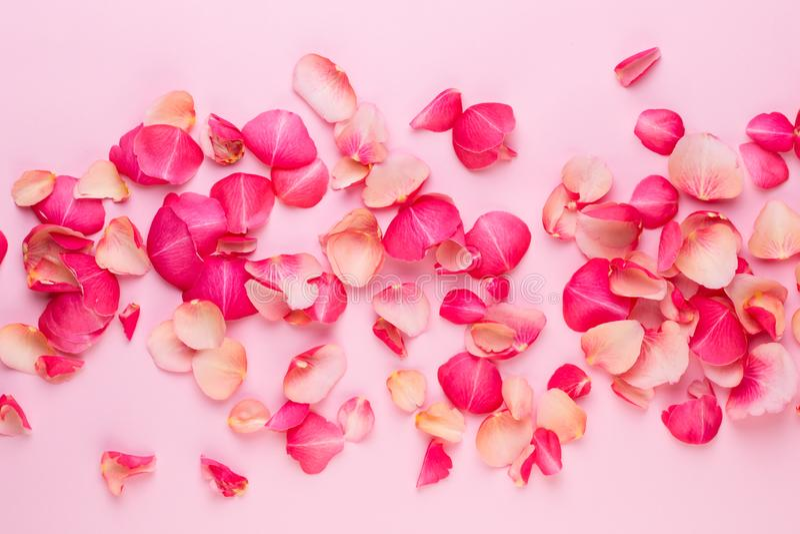 βαλεντίνος ημέρας s Αυξήθηκε πέταλα λουλουδιών στο άσπρο υπόβαθρο Ανασκόπηση ημέρας βαλεντίνων Επίπεδος βάλτε, τοπ άποψη, διάστημ στοκ εικόνες