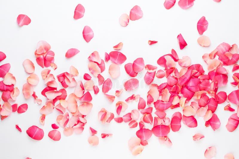 βαλεντίνος ημέρας s Αυξήθηκε πέταλα λουλουδιών στο άσπρο υπόβαθρο Ανασκόπηση ημέρας βαλεντίνων Επίπεδος βάλτε, τοπ άποψη, διάστημ στοκ φωτογραφία με δικαίωμα ελεύθερης χρήσης