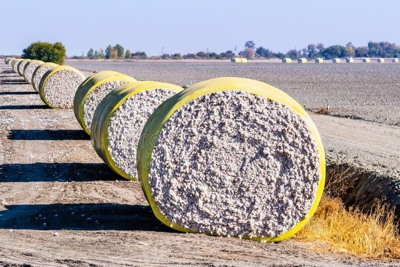 Βαμβακερά μπαλάκια διατεταγμένα σε μια σειρά δίπλα σε ένα συγκομισμένο αγρόκτημα, έτοιμα για παραλαβή· Κεντρική Καλιφόρνια, Ηνωμέ στοκ φωτογραφίες