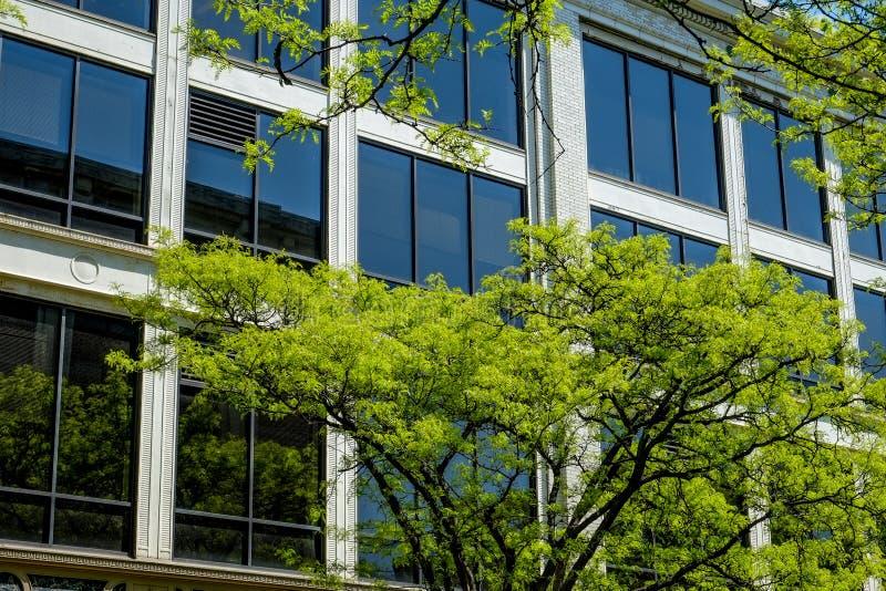 Βαμμένα παράθυρα και πράσινα δέντρα άνοιξη στοκ εικόνες με δικαίωμα ελεύθερης χρήσης