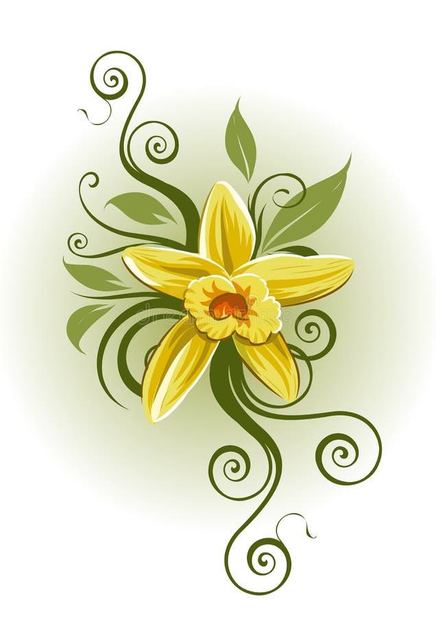 βανίλια planifolia