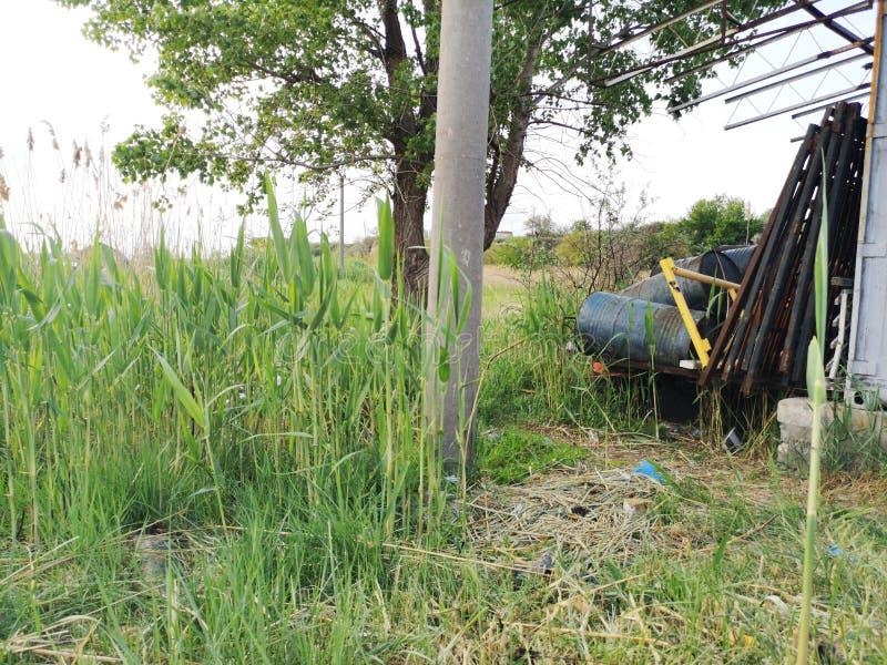 Βαρέλια των βιομηχανικών αποβλήτων κοντά στο πράσινους δέντρο και τους καλάμους Η έννοια της ρύπανσης της φύσης και αποθήκευση τω στοκ φωτογραφίες με δικαίωμα ελεύθερης χρήσης