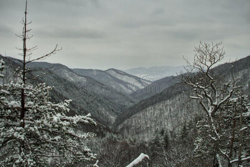 Βαρύ τοπίο βουνών κουρδιστηριών carpathians στοκ φωτογραφίες