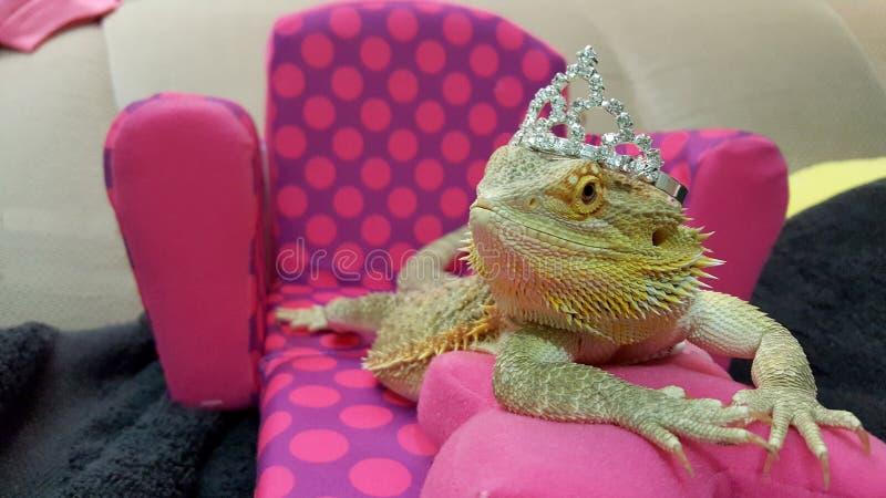 Βασίλισσα Dragon στοκ φωτογραφίες