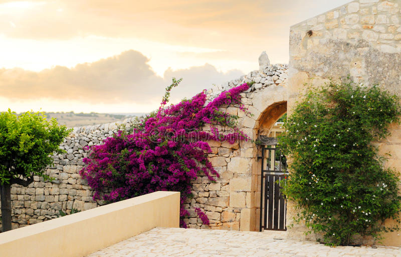 βασικός τοίχος λουλο&upsil στοκ φωτογραφία