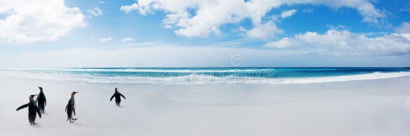 βασιλιάς τίτλων penguins στο ύδωρ στοκ εικόνες με δικαίωμα ελεύθερης χρήσης