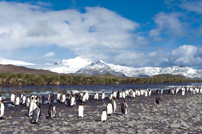 Βασιλιάς penguins στη νότια Γεωργία στοκ εικόνα με δικαίωμα ελεύθερης χρήσης