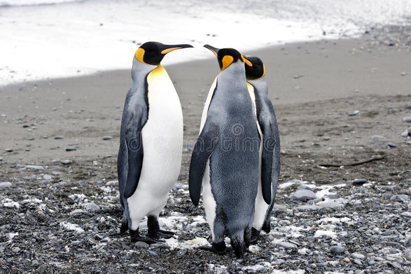 Βασιλιάς penguins στοκ φωτογραφία με δικαίωμα ελεύθερης χρήσης
