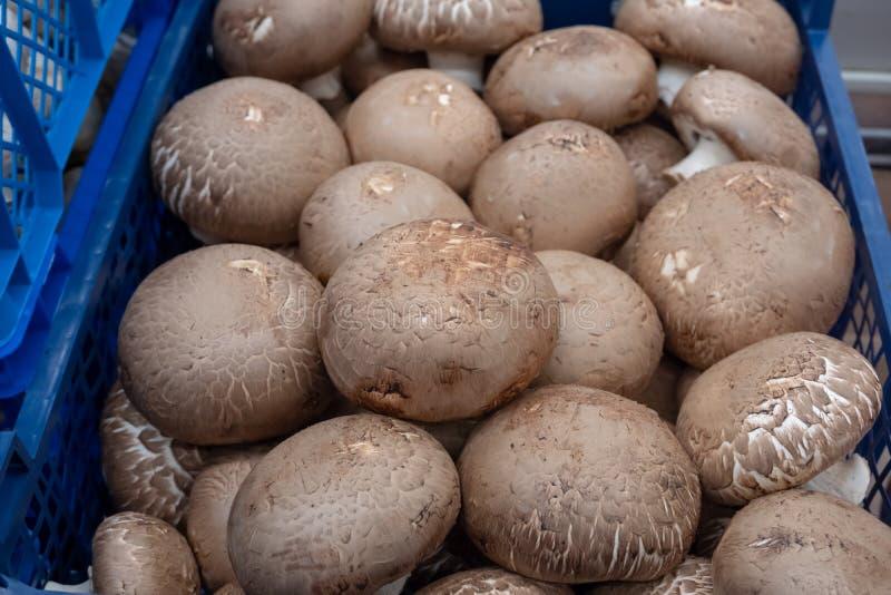 Βασιλικό в корзинах на прилавке Многие грибы Малая глубина резкости στοκ φωτογραφία με δικαίωμα ελεύθερης χρήσης