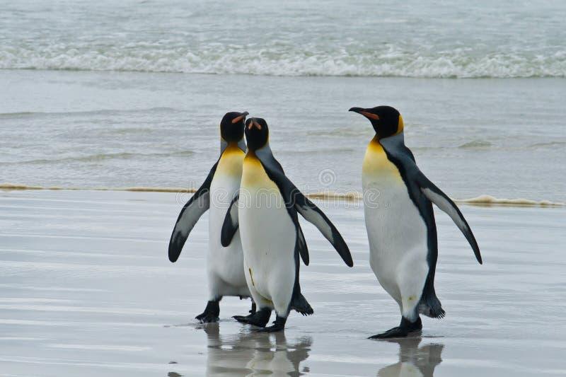 Βασιλιάς τρία penguins στοκ εικόνα