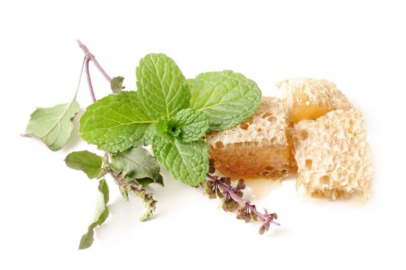Βασιλικός (tulsi), μέντα και μέλι στην ομάδα σχετικά με το απομονωμένο λευκό στοκ εικόνες