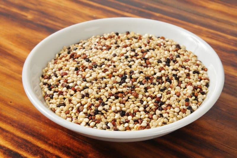 Βασιλικό quinoa ουράνιων τόξων στοκ εικόνα