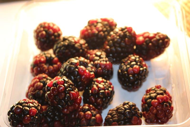 Βατόμουρα που απομονώνονται που φαίνονται juicy και ώριμα Τα βατόμουρα είναι από το γένος Rubus στην οικογένεια Rosaceae στοκ εικόνες με δικαίωμα ελεύθερης χρήσης