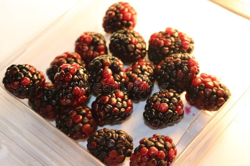 Βατόμουρα που απομονώνονται που φαίνονται juicy και ώριμα Τα βατόμουρα είναι από το γένος Rubus στην οικογένεια Rosaceae στοκ εικόνα με δικαίωμα ελεύθερης χρήσης