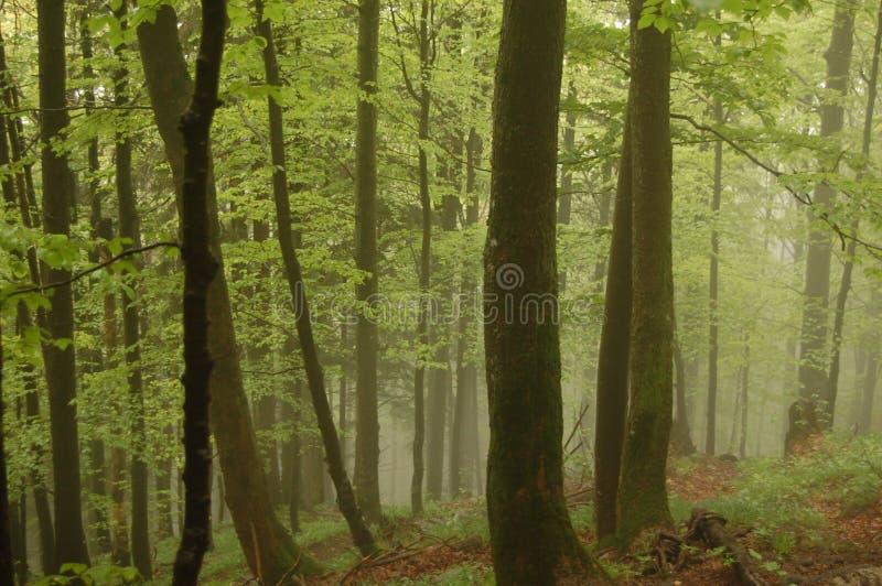 Βαυαρία Γερμανία Tegernsee στοκ εικόνα