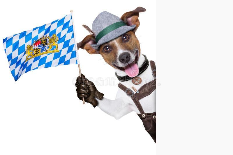Βαυαρικό σκυλί στοκ φωτογραφία