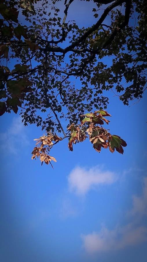 Βγάζει φύλλα στον ουρανό στοκ φωτογραφία με δικαίωμα ελεύθερης χρήσης