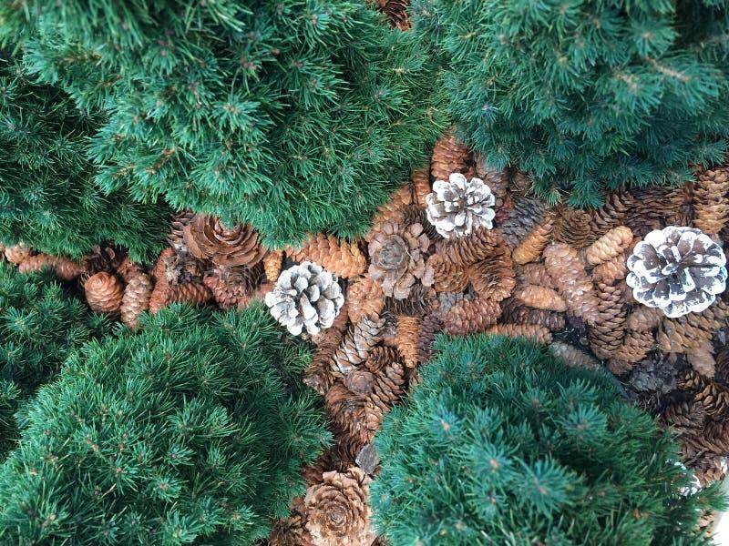Βελόνες και φύλλα κώνων πεύκων μικτές στοκ εικόνα με δικαίωμα ελεύθερης χρήσης