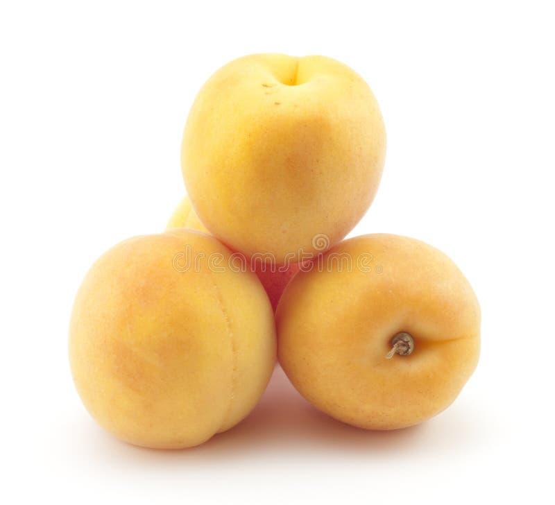 βερίκοκο κίτρινο στοκ εικόνες με δικαίωμα ελεύθερης χρήσης
