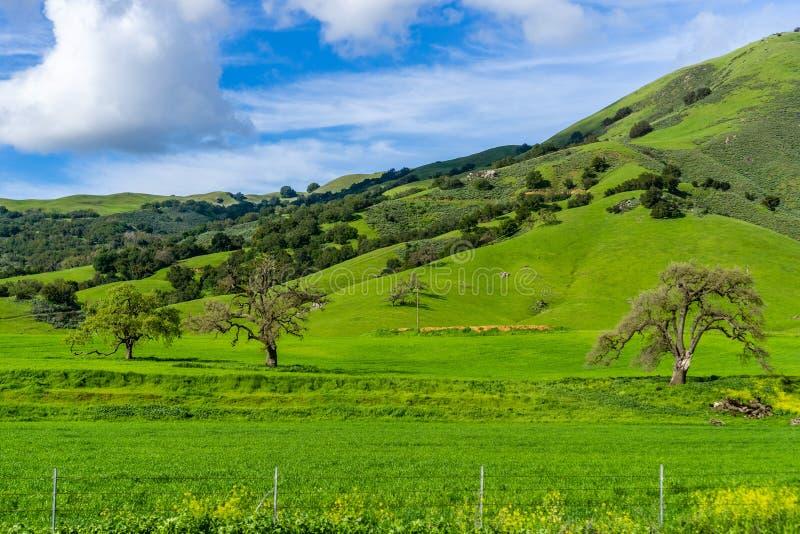 Βεραμάν λόφοι και άσπρα, χνουδωτά σύννεφα μια ηλιόλουστη ημέρα στην περιοχή κόλπων του νότιου Σαν Φρανσίσκο, Καλιφόρνια στοκ φωτογραφία με δικαίωμα ελεύθερης χρήσης