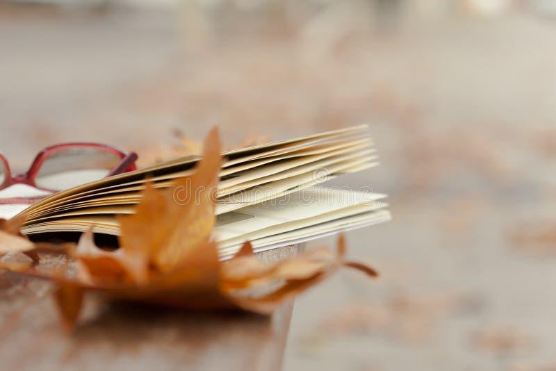 Βιβλίο στον πάγκο στο πάρκο φθινοπώρου στοκ εικόνα