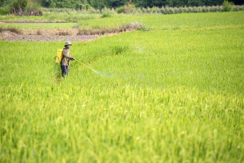 Βιετναμέζικος εργαζόμενος αγροτών στον τομέα ρυζιού σε Sapa βόρειο Βιετνάμ στοκ φωτογραφία με δικαίωμα ελεύθερης χρήσης