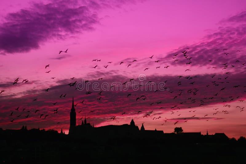 βιολέτα ηλιοβασιλέματος στοκ φωτογραφία