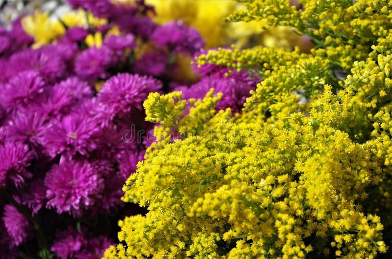 Βιολέτα τήξης συνδυασμού χρώματος και κίτρινος στην επίδειξη στην αγορά της Ονδούρας στοκ εικόνα με δικαίωμα ελεύθερης χρήσης