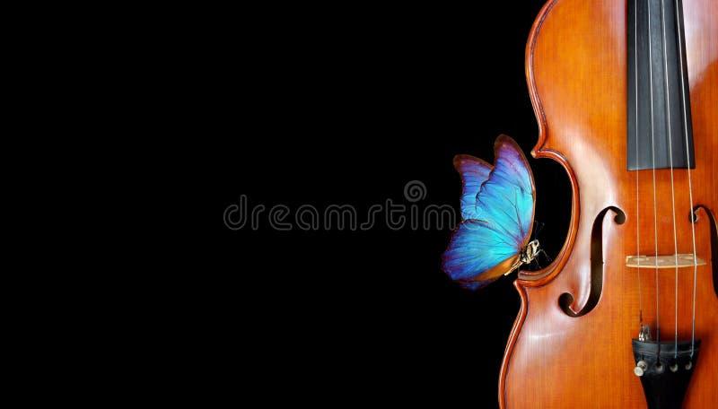 Βιολί στο μαύρο κλείσιμο όμορφο μπλε πεταλούδα μορφότυπο με βιολί ιδέα μουσικής αντιγραφή κενών στοκ εικόνες με δικαίωμα ελεύθερης χρήσης