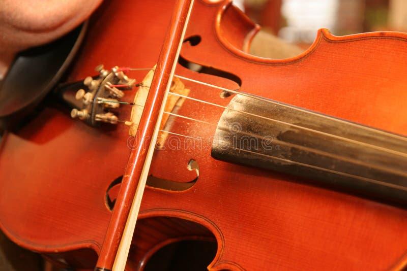 βιολί φορέων στοκ εικόνα