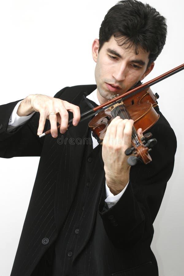 βιολί φορέων στοκ εικόνες
