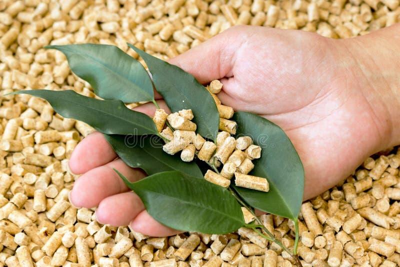 Βιολογικά καύσιμα Ξύλινοι σβόλοι φιαγμένοι από πιεσμένο πριονίδι και πράσινα φύλλα στο χέρι του στοκ εικόνα
