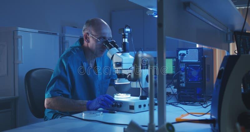 Βιολόγος που αναλύει το δείγμα με το μικροσκόπιο στοκ εικόνες