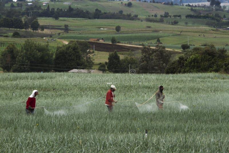 Βιομηχανία γεωργίας: Εργαζόμενοι αγροτών στον τομέα στοκ εικόνες