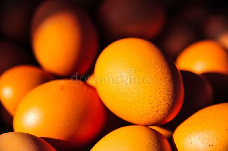 Βιομηχανία παραγωγής αυγών στοκ φωτογραφία