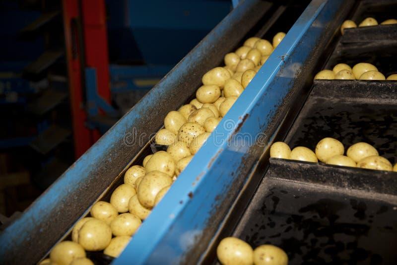 Βιομηχανία Potatoe στοκ εικόνες